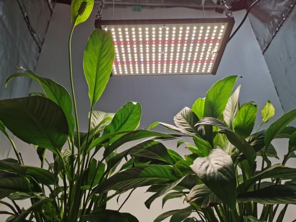 HonLIGHT 120W Full Spectrum Plant Grow Light LED Hydroponic Growing Lights for 2x2FT Microgreens Succulents Houseplant, 1x1FT Stealth Seedling Veg Grow Lights